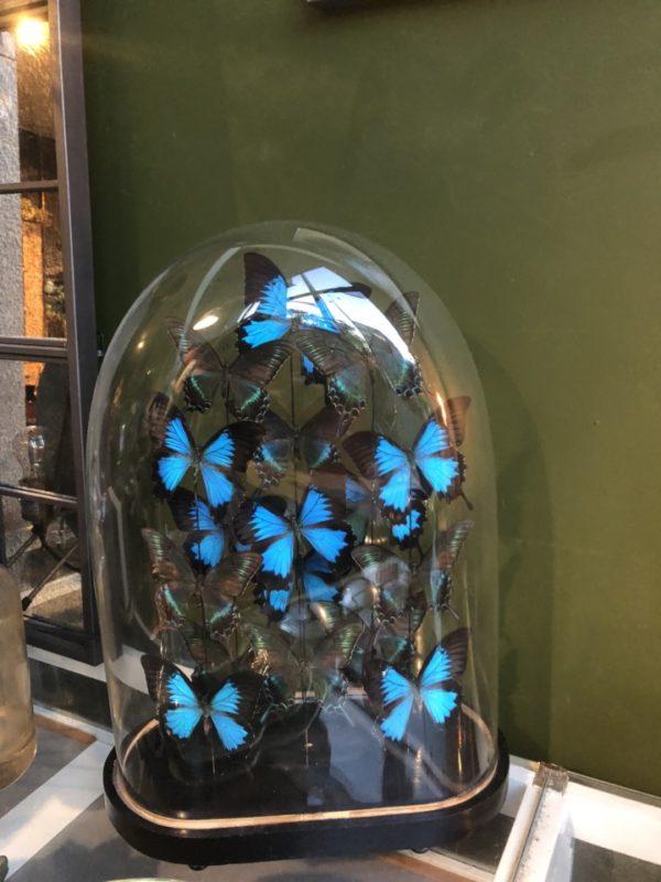 Glazen stolp met vlinders binnenin