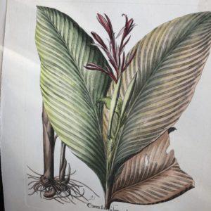 Oude kleurrijke botanische prenten