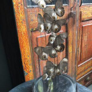 Perle øye sommerfugler i gammel glass klokke krukke på tre base