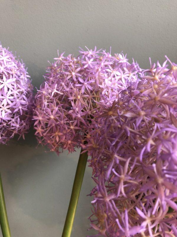Grote paarse ronde zijden bloembollen op groene steel