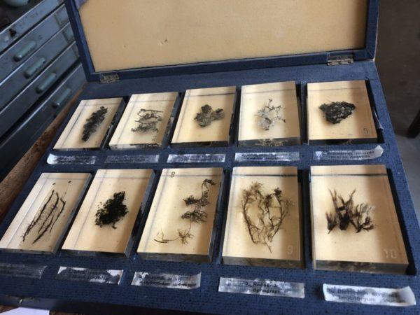 Herbarium, planten en bloemen