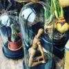 Oude authentieke hoge glazen stolp op houten voet
